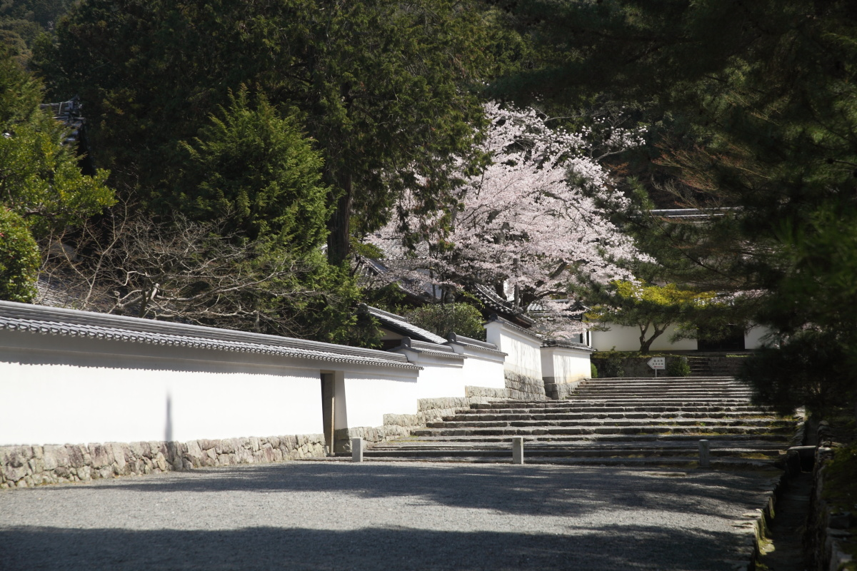 桜 2013 <京都 東山界隈> _f0021869_2362061.jpg