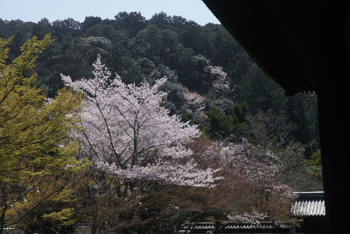 桜 2013 <京都 東山界隈> _f0021869_2365123.jpg
