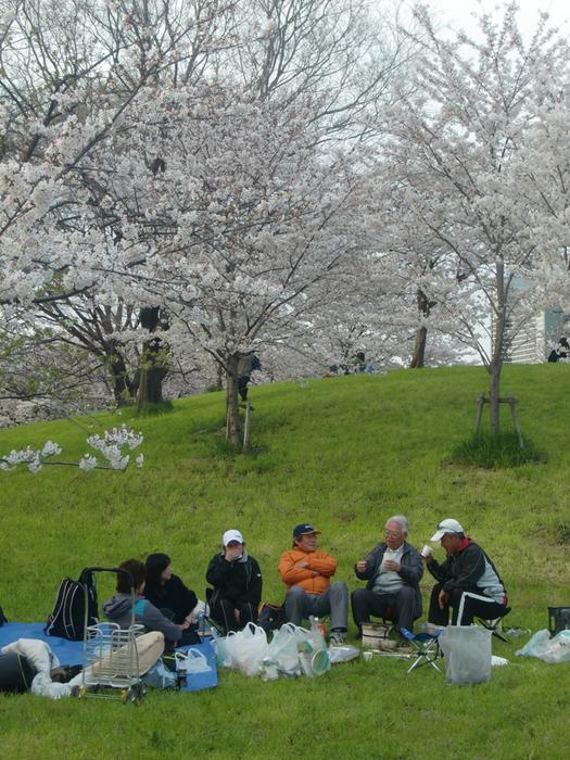 ◆ 花見 _f0238779_842993.jpg