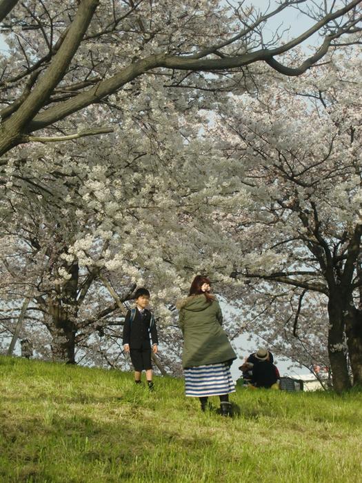 ◆ 花見 _f0238779_863747.jpg