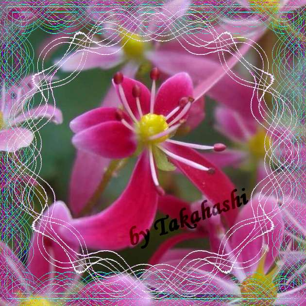 c0129682_20143612.jpg