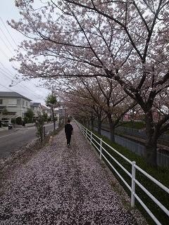 桜吹雪_f0059988_16335952.jpg