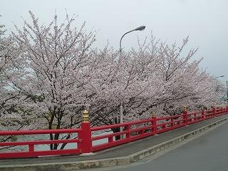 お花見ドライブ<アクティブライフ箕面>_c0107602_1111947.jpg