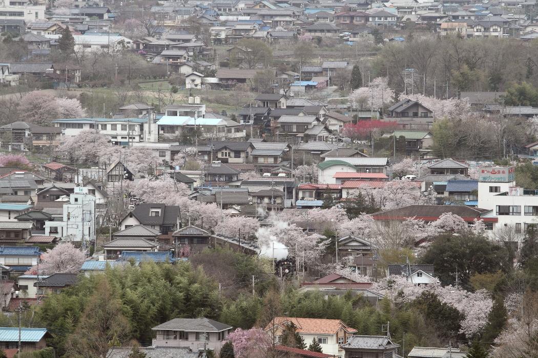 桜の街、長瀞 - 2013年桜・秩父 -  _b0190710_2216116.jpg