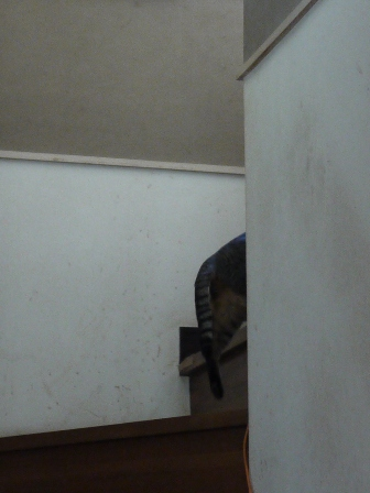 猫のお友だち ちびちゃん編。_a0143140_10182043.jpg