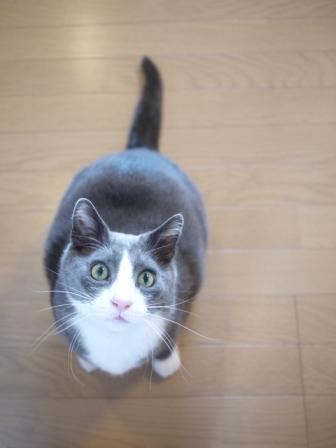 猫のお友だち カン太くん編。_a0143140_1064096.jpg