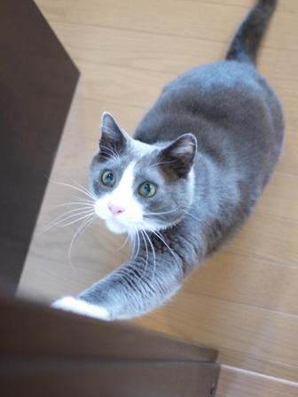 猫のお友だち カン太くん編。_a0143140_1065620.jpg