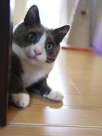 猫のお友だち カン太くん編。_a0143140_1073419.jpg