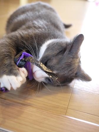 猫のお友だち カン太くん編。_a0143140_10756100.jpg