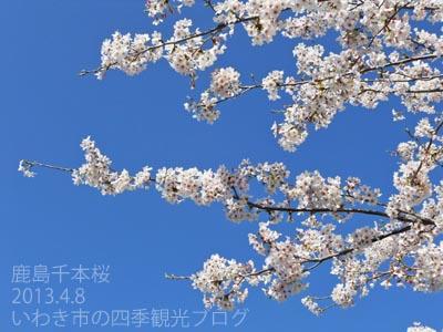 f0105342_1701351.jpg