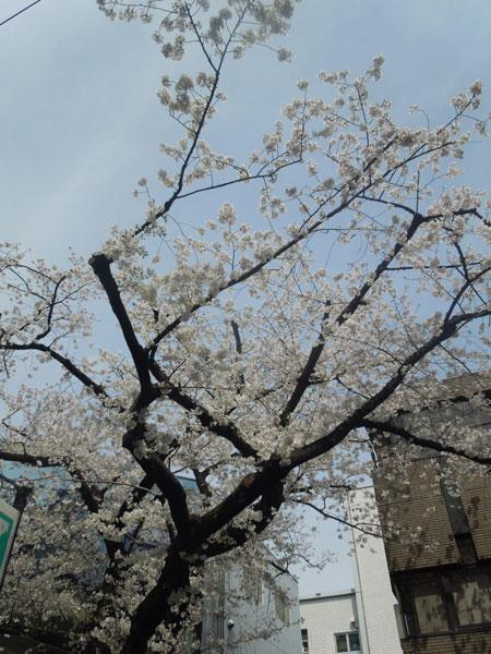 TOKYO 春旅 3日目_a0262845_11595970.jpg