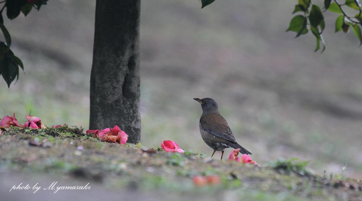 春の冬鳥_c0217255_18213528.jpg