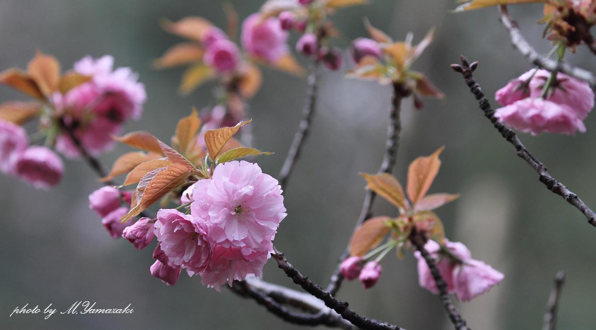 春の冬鳥_c0217255_1823787.jpg