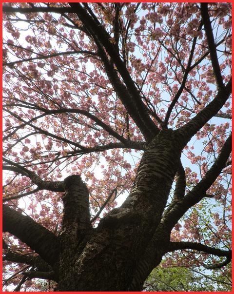 青山・花図鑑。_e0236072_17503727.jpg