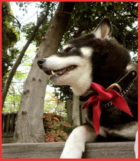 青山・花図鑑。_e0236072_1843080.jpg