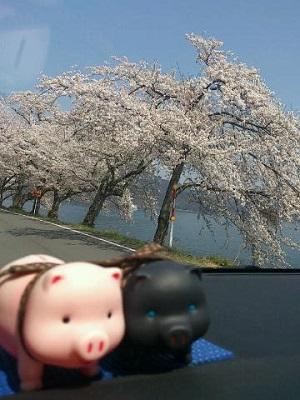 滋賀県おすすめスポット_e0246398_22161352.jpg