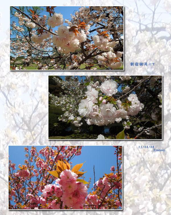 新宿御苑へお花見_c0051105_0385328.jpg