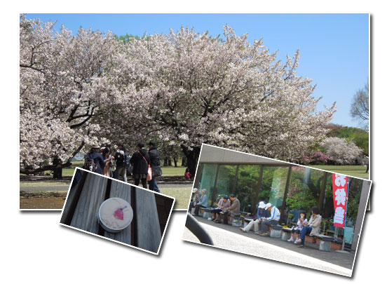 新宿御苑へお花見_c0051105_0553765.jpg