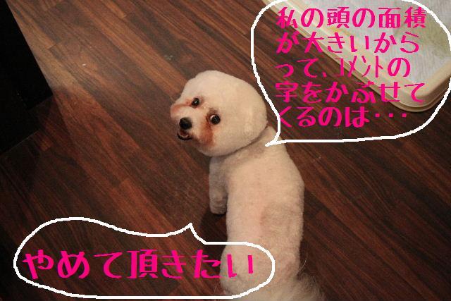 こんばんわ!!_b0130018_1165896.jpg