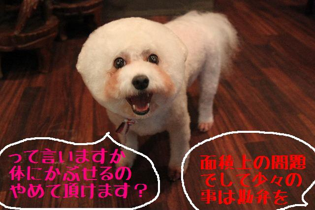 こんばんわ!!_b0130018_117570.jpg