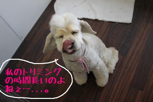 こんばんわ!!_b0130018_1272972.jpg