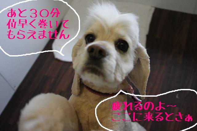 こんばんわ!!_b0130018_1273631.jpg