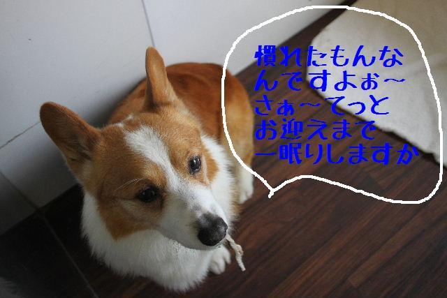 こんばんわ!!_b0130018_1292384.jpg