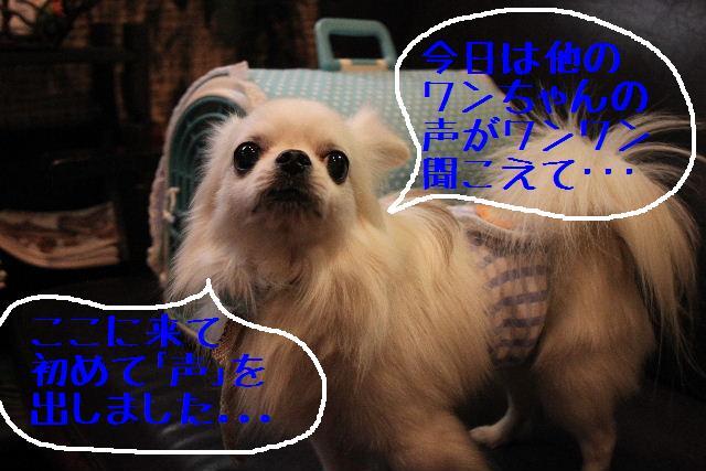 こんばんわ!!_b0130018_1311748.jpg