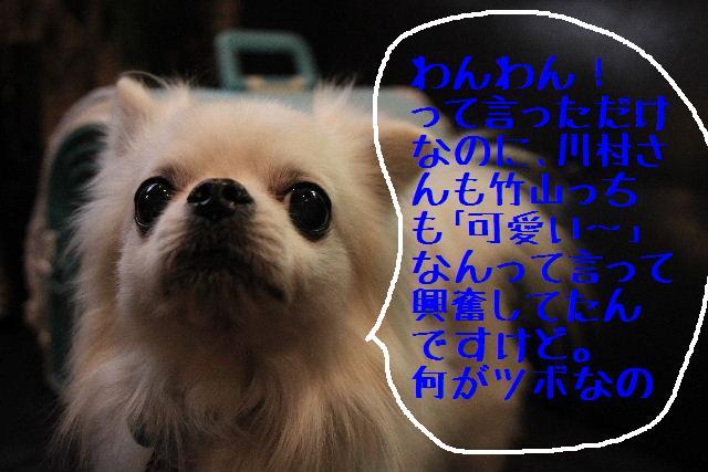 こんばんわ!!_b0130018_1312386.jpg