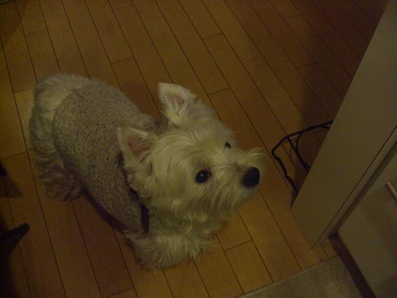 10年前、急性腸炎経験犬が、急性大腸炎も経験!_b0107163_139824.jpg
