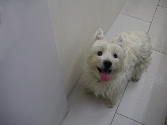 10年前、急性腸炎経験犬が、急性大腸炎も経験!_b0107163_140894.jpg