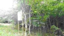 f0096068_4323217.jpg