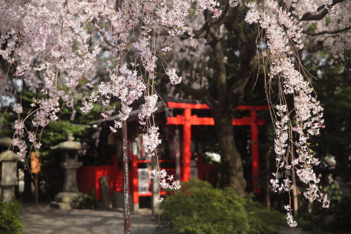 桜 2013 <京都 水火天満宮~上品蓮台寺> _f0021869_2465632.jpg