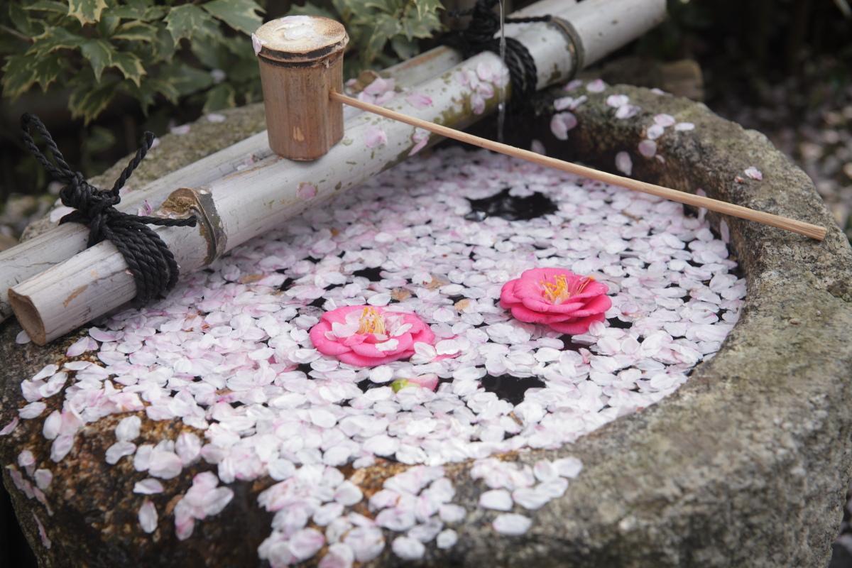 桜 2013 <京都 水火天満宮~上品蓮台寺> _f0021869_2473783.jpg