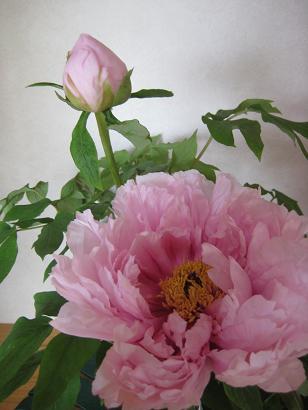 ピンク*ピンク*ピンク***_e0290872_2282117.jpg