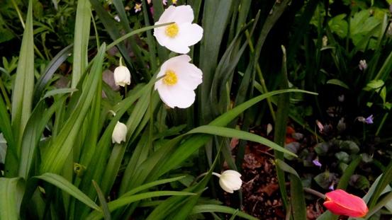 白い花が咲いてる~♪_b0214473_1663472.jpg