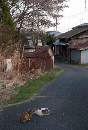 炭住の猫_f0173596_8113597.jpg