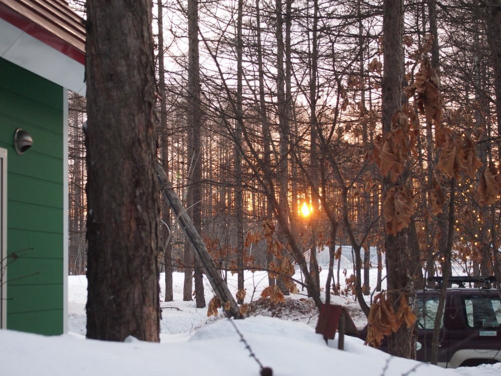 春の陽気の森の仲間たちと・・すこし遅くなった夕暮れ_f0276498_173112.jpg