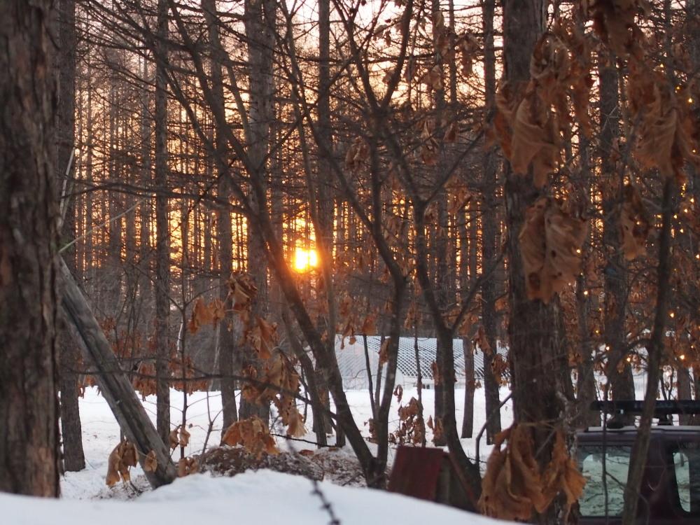 春の陽気の森の仲間たちと・・すこし遅くなった夕暮れ_f0276498_1772117.jpg