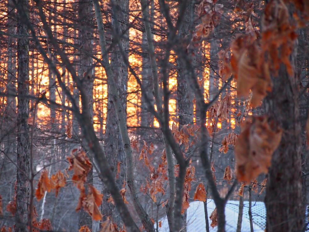 春の陽気の森の仲間たちと・・すこし遅くなった夕暮れ_f0276498_17833.jpg