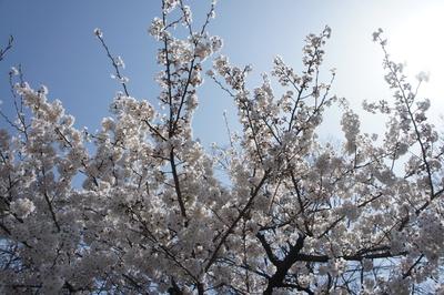 春がキタッ_b0173606_16361126.jpg