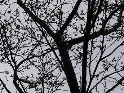今日の桜_f0236012_1126174.jpg