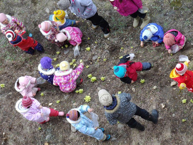 今年最初の開花とフキノトウ狩り_c0025115_19591649.jpg