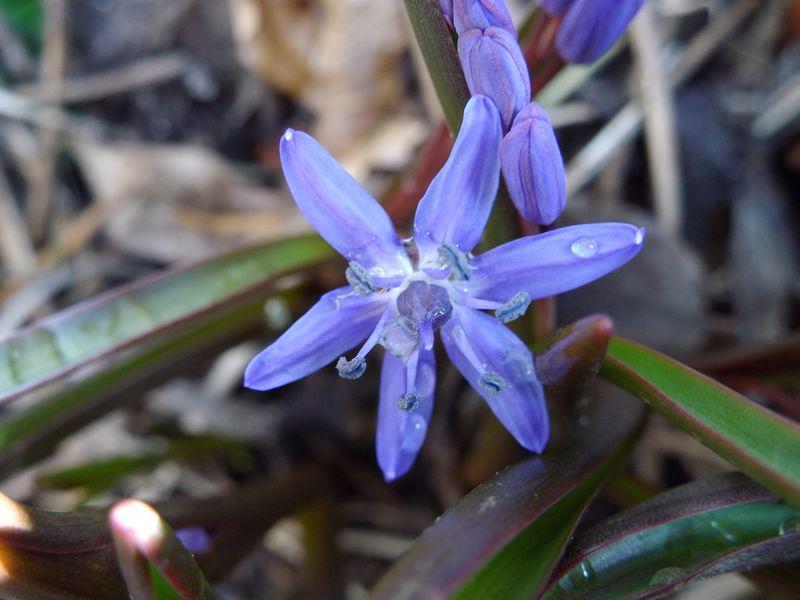 今年最初の開花とフキノトウ狩り_c0025115_1959232.jpg
