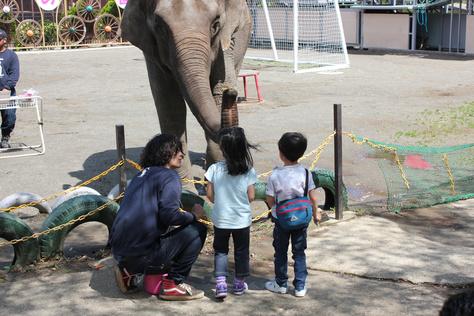 象の国_c0204724_1431331.jpg