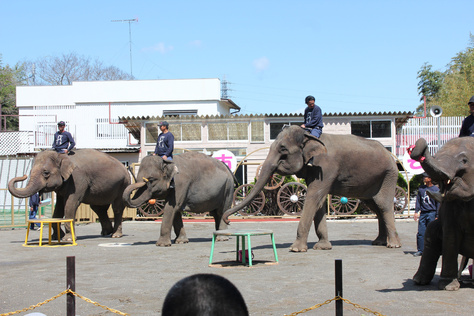 象の国_c0204724_1493176.jpg