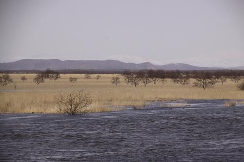 湿原あふれる 4月11日_f0113639_15523612.jpg