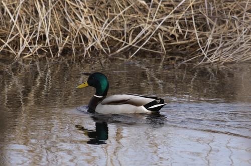 湿原あふれる 4月11日_f0113639_16114083.jpg