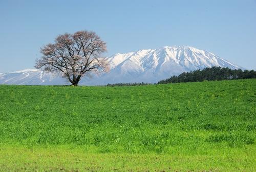 小岩井農場の春_a0165546_1911499.jpg