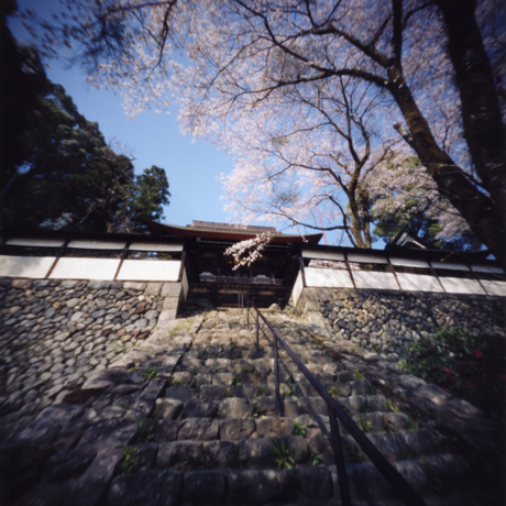 海禅寺の桜(1) 東京都青梅市 Pinhole Photography_f0117059_1711632.jpg